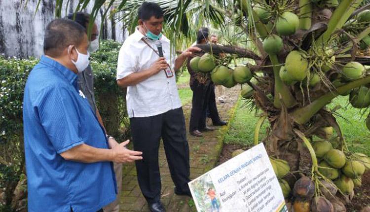 Pengembangan Kelapa di Gorontalo Didukung Balit Palma