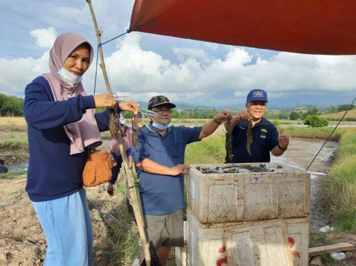 Hasil Produksi Budidaya Perikanan di Gorut Dijamin Bisa Meningkat